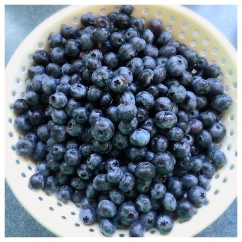 blueberries web