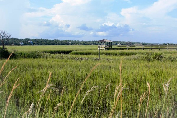 pawleys salt marsh
