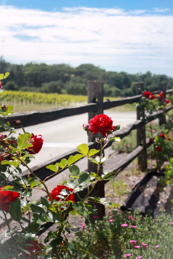 wine country rose